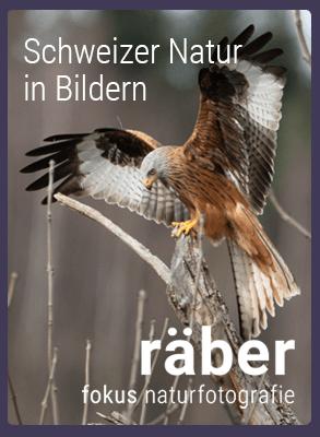 Fokus-Naturfotografie-ch: Landschafts- und Tierfotografie Schweiz