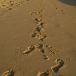 Christliche Lebensberatung, Seelsorge, Coaching, Lebenshilfe