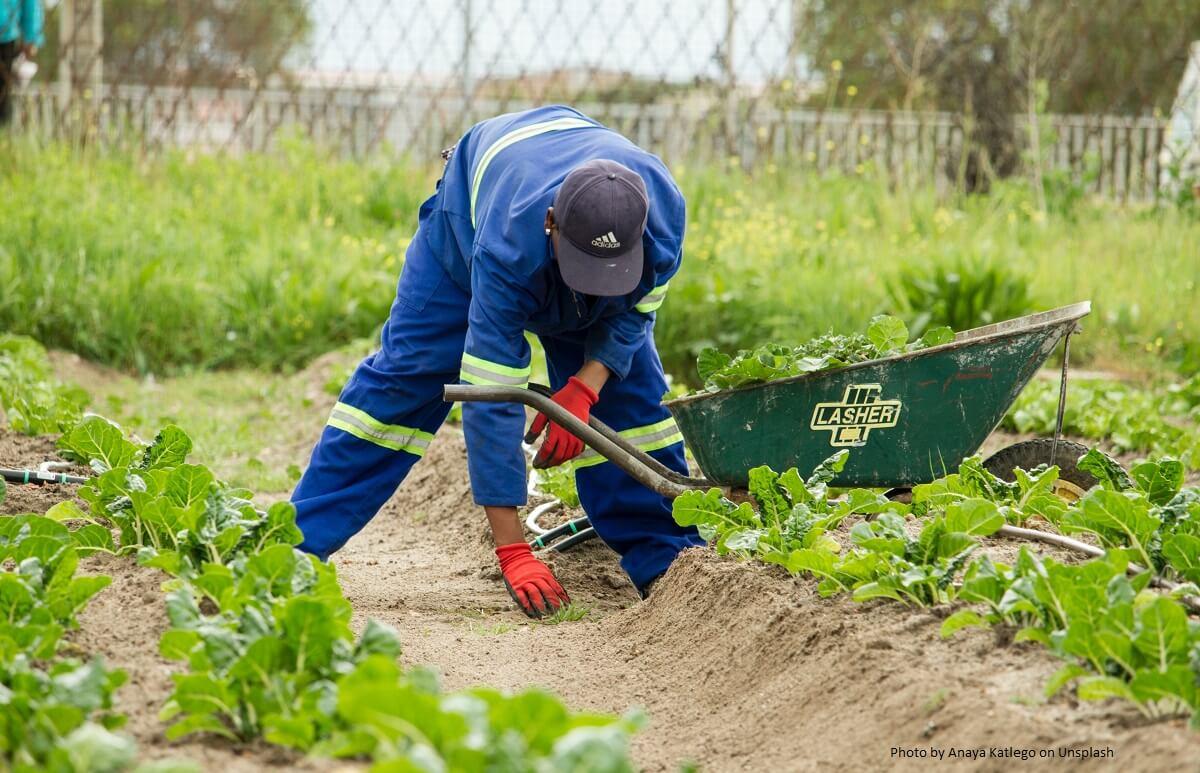 Der Gartenarchitekt: Gott spielen im Garten